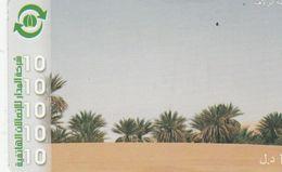 Libya - Almadar - Palms - Libye