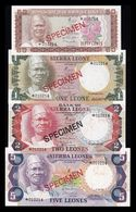 Sierra Leona Set 50 Cents 1 2 5 Leones 1974-1985 Pick 4 5 6 7 Specimen SC- AUNC - Sierra Leone