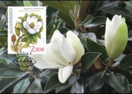Slovakia - 2020 - Nature Protection - Košice Botanical Garden - Magnolia Grandiflora - Maximum Card - Lettres & Documents