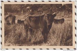 4AF196 Carte Photo GEORGE EN CAMARGUE LOU MAMAI REDOUTABLE COCARDIER MANADE AUBERT PETIT BADON  2 SCANS - Non Classés