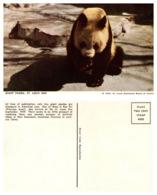 Giant Panda, St Louis Zoo, St Louis Missouri (8589) - Orsi