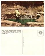 Diving Polar Bears, St Louis Zoo, St Louis Missouri (8586) - Orsi