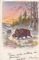 Jagd Hunting Chasse  Animal  Pork  Pig  Schwein Ever   Old Postcard. Cpa. 1903 - Caccia