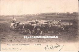 57 Schlachtfeldern Saint St Privat Mouton Chevres Goat Paturage Bergere Rare Nels - France