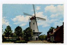 D327 - Oss Witte Molen - Molen - Moulin - Mill - Mühle - Oss