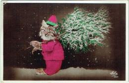 Carte Photo. Fantaisie. Chat Humanisé Et Sapin De Noël - Cats