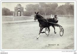 FAENZA Ravenna CORSE TROTTO 1910 CAMPIONATO EUROPEO SHDY G. - Faenza