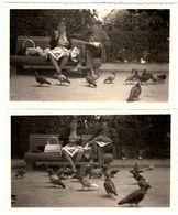 Photo Originale La Vie D'un Banc De Nice Avec Couple D'Anciens Entre Lecture Et Nourrissage Des Pigeons En 1963 - Personnes Anonymes