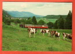 IKC-10  Troupeau De Vaches Et Train Yverdon-Ste-Croix Près De Six-Fontaines Non Circulé.Grand Format - VD Vaud