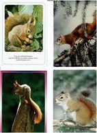 ECUREUILS  /  Lot De 54 Cartes Postales Modernes Neuves - Cartes Postales