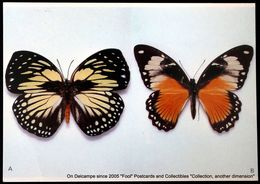 PAPILLON Euxanthe Madagascariensis Lucas-Madagascar Papilio Dardanus Braun Afrique Du Sud BUTTERFLY - Butterflies