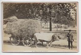 PAU - Attelage Bearnais - Vieux Photo (Albumine ?) Support Carton - Lafon - Photographs
