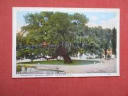 Old Oak Tree  Magnolia Street        South Carolina > Charleston Ref 4175 - Charleston