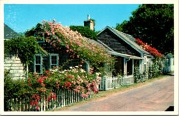 Massachusetts Nantucket Island Typical Rose Covered Cottages - Nantucket