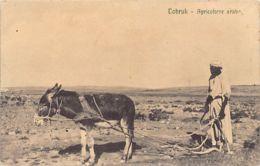 Libya - TOBRUK - Agricoltore Arabo - Arab Farmer - Libye