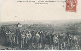 21- GEVREY-CHAMBERTIN  : Les Vendanges Aux Varoilles - Gevrey Chambertin