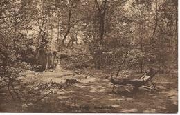 4 Calmpthout Kalmthout Heide Boschzicht. Hoelen 10271 - Kalmthout