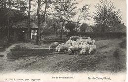 12 Calmpthout Kalmthout Heide In De  Bessemhei Hoelen 1748 - Kalmthout