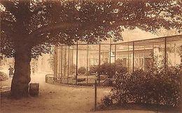 Belgium Anvers Jardin Zoologique Voliere Des Paons, Pauwenvlucht - Belgique