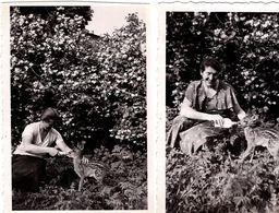 5 Photos Originales Sport & Loisir, La Chasse & Ses Gibiers, Chevreuil, Biberon Pour Bambi, Cerf, Chien & Chasseurs 1940 - Sports