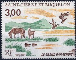 485A Partie Du TRIPTYQUE Le Grand BARACHOIS OBLITERE   ANNEE1987 - St.Pierre & Miquelon