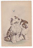 Top Rare Illustrateur Renaudin Naudy Superbes Chats Cats Avec Papillon Bleu N°1135 B VOIR DOS - Naudy