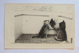 """""""Katzen, Spielen"""" 1930 ♥ (2241) - Katzen"""