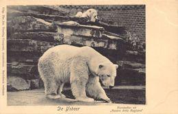 AMSTERDAM (NH) Dierentuin Zoo - De Ysbeer - Amsterdam