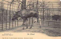 AMSTERDAM (NH) Dierentuin Zoo - De Eland - Amsterdam