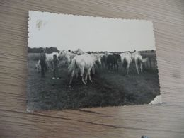 Photo Originale 12.3 X 8.8 Camargue Chevaux Manade Gardians - Places