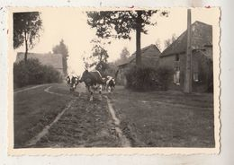 Kasterlee - September 47 - Gehucht Goor - Foto 6 X 8.5 Cm - Lieux