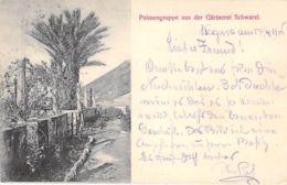 Ragusa - Palmengruppe Aus Der Gärtnerei Schwarzl 1906 - Trento