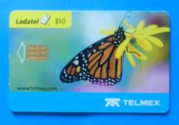 Mexico Butterfly Papillon Mariposa Schmetterling Farfalla Insect Butterflies Ladatel - Farfalle