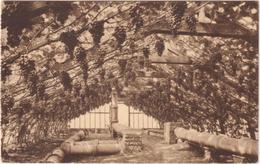 Hoeylaert - Binnenzicht Van Een Druivenser - Hoeilaart
