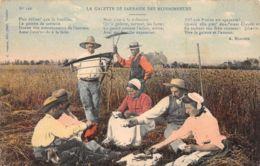 Calvados (14) - La Galette De Sarrasin Des Moissonneurs - France