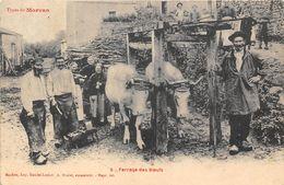 AGRICULTURE-EN MORVAN- FERRAGE DES BOEUFS - Attelages