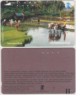 90/ Indonesia; Rice Fields - Indonésie
