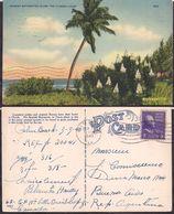 Palm Beah FL - Post Card - Spanish Bayonettes Along The Florida Coast  - 1940 - Circulee - Cygnus - Palm Beach