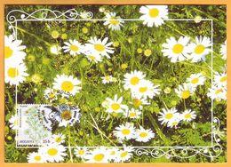 2016  Moldova Moldavie Moldau.  Wildflowers Of Moldova. Maximum Card  Chamomile (lat.Matricaria Recutita) - Plants