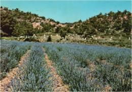 PROVENCE - CPM La Provence Embaumée Et Son Miel Parfumé 1974 - Provence-Alpes-Côte D'Azur