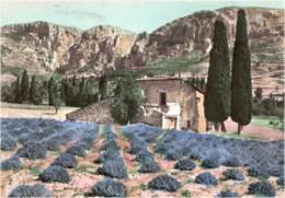 PROVENCE - CPSM GD FORMAT - PAYSAGE DE PROVENCE 1962 - Provence-Alpes-Côte D'Azur