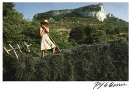 PROVENCE - CPM Charretée De Lavande - Provence-Alpes-Côte D'Azur