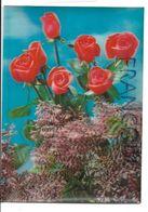 Lilas Et Roses Rouges. - Cartes Stéréoscopiques