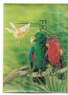 Perroquets Et Oiseau Blanc. - Cartes Stéréoscopiques