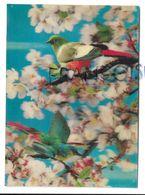 Oiseaux Sur Cerisier. - Cartes Stéréoscopiques