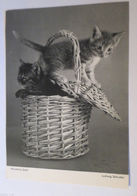 """""""Katzen, Korb, Munteres Spiel"""" 1950  ♥ (15789) - Katzen"""
