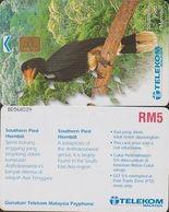 184/ Malaysia; Bird - Southern Pied Hornbill - Malaysia