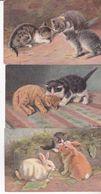 CPA CHAT , 3 Cartes De Chats.( Série 217.)1904. - Katzen