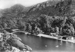 - 20 - PORTO (Corse). - La Rivière Et La Forêt D'Eucalyptus - Scan Verso - - Francia