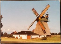Ak  Deutschland - Nordsee - Amrum  - Windmühle - Nordfriesland
